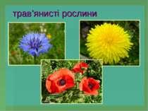 трав'янисті рослини