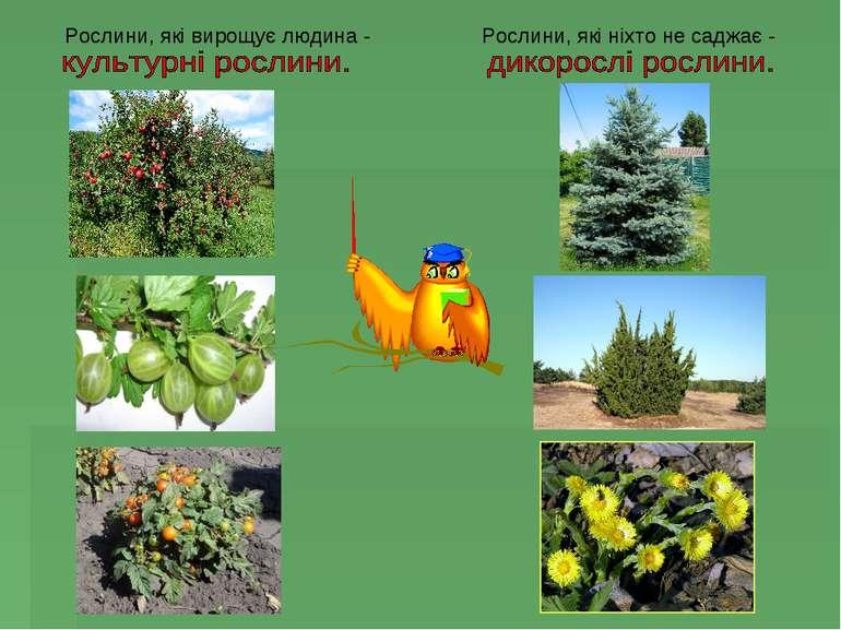 Рослини, які вирощує людина - Рослини, які ніхто не саджає -