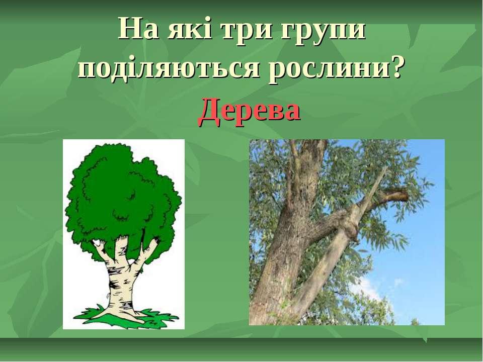На які три групи поділяються рослини? Дерева