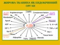 ЖИРОВА ТКАНИНА ЯК ЕНДОКРИННИЙ ОРГАН