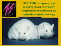 """ЛЕПТИН – гормон, що секретується """"ситими"""" жировими клітинами та пригнічує цен..."""