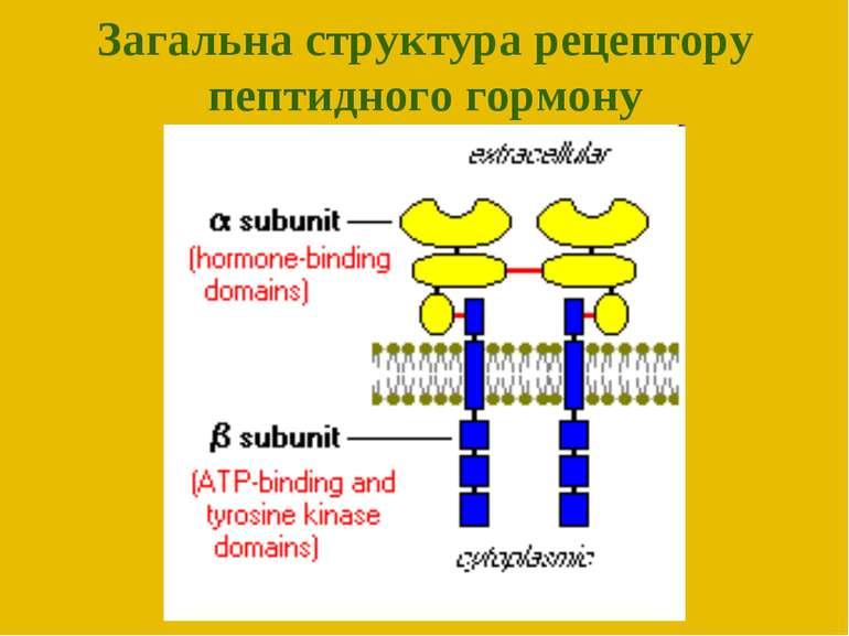 Загальна структура рецептору пептидного гормону