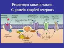 Рецептори запахів також G protein-coupled receptors