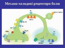 Механо-холодові рецептори болю