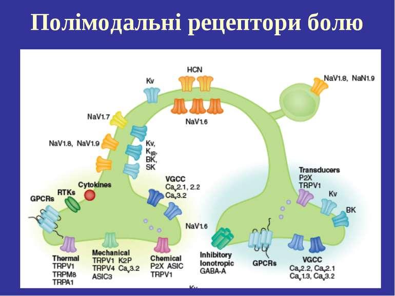 Полімодальні рецептори болю