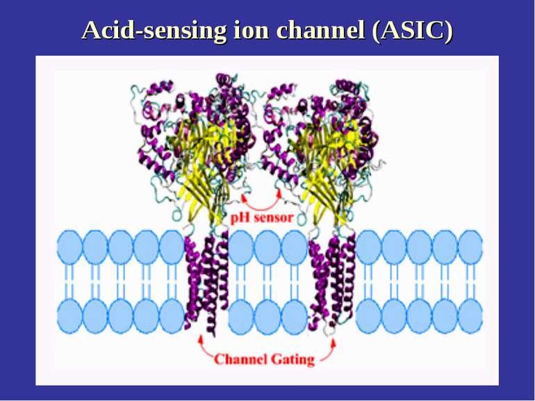Acid-sensing ion channel (ASIC)