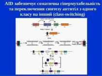 AID забезпечує соматична гіпермутабельність та переключення синтезу антитіл з...
