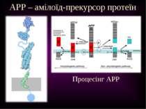 APP – амілоїд-прекурсор протеїн Процесінг APP