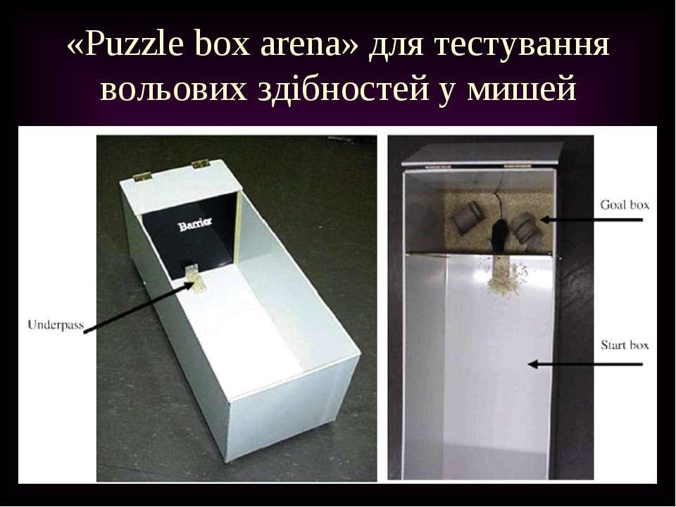 «Puzzle box arena» для тестування вольових здібностей у мишей