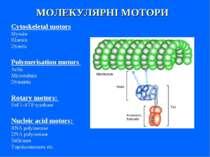 МОЛЕКУЛЯРНІ МОТОРИ Cytoskeletal motors Myosin Kinesin Dynein Polymerisation m...