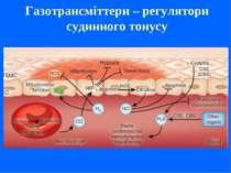 Газотрансміттери – регулятори судинного тонусу