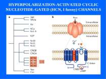 HYPERPOLARIZATION-ACTIVATED CYCLIC NUCLEOTIDE-GATED (HCN, I funny) CHANNELS