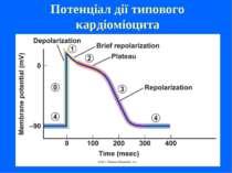 Потенціал дії типового кардіоміоцита