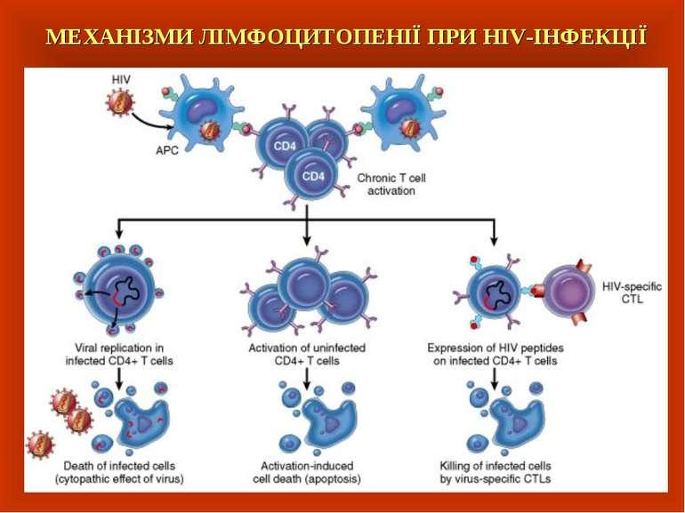 МЕХАНІЗМИ ЛІМФОЦИТОПЕНІЇ ПРИ HIV-ІНФЕКЦІЇ
