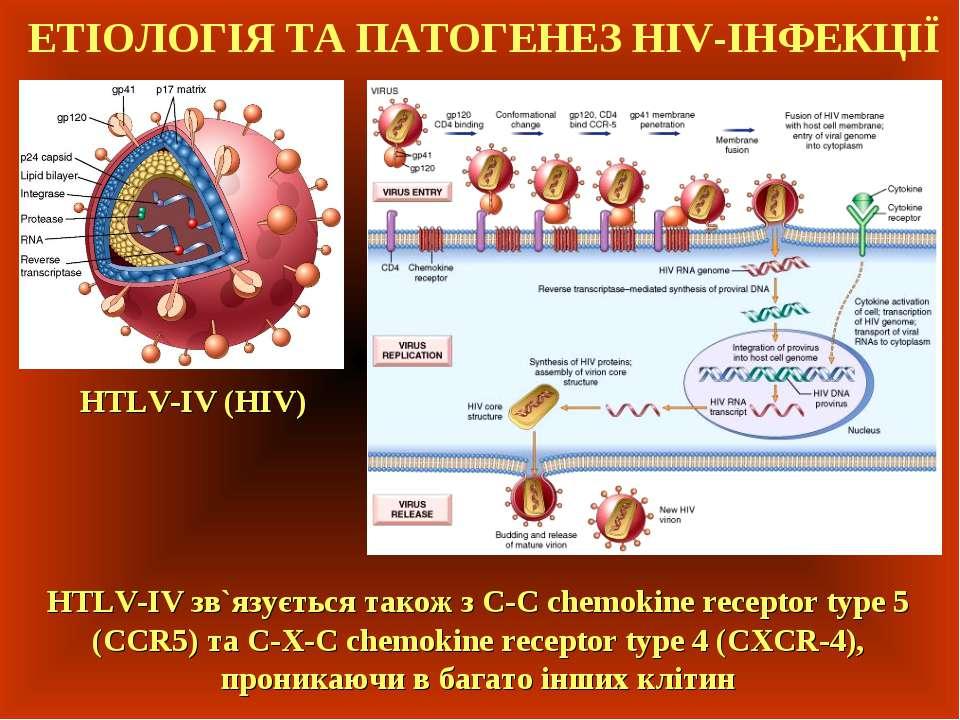 ЕТІОЛОГІЯ ТА ПАТОГЕНЕЗ НIV-ІНФЕКЦІЇ HTLV-IV (HIV) HTLV-IV зв`язується також з...