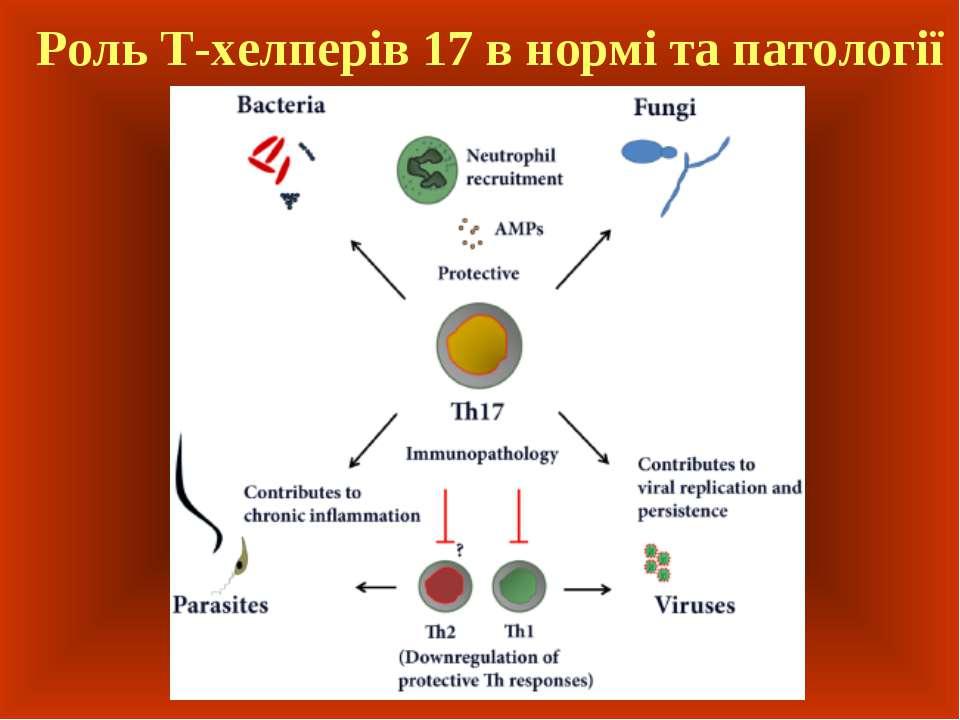 Роль Т-хелперів 17 в нормі та патології