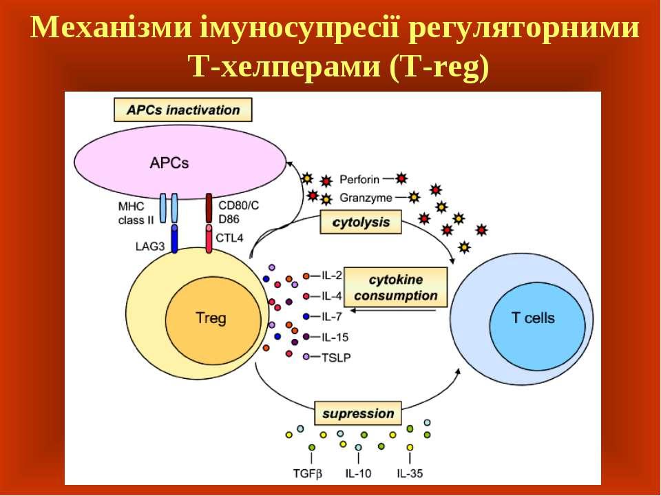 Механізми імуносупресії регуляторними Т-хелперами (T-reg)