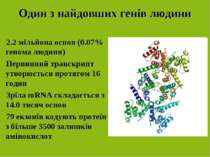 Один з найдовших генів людини 2.2 мільйона основ (0.07% генома людини) Первин...