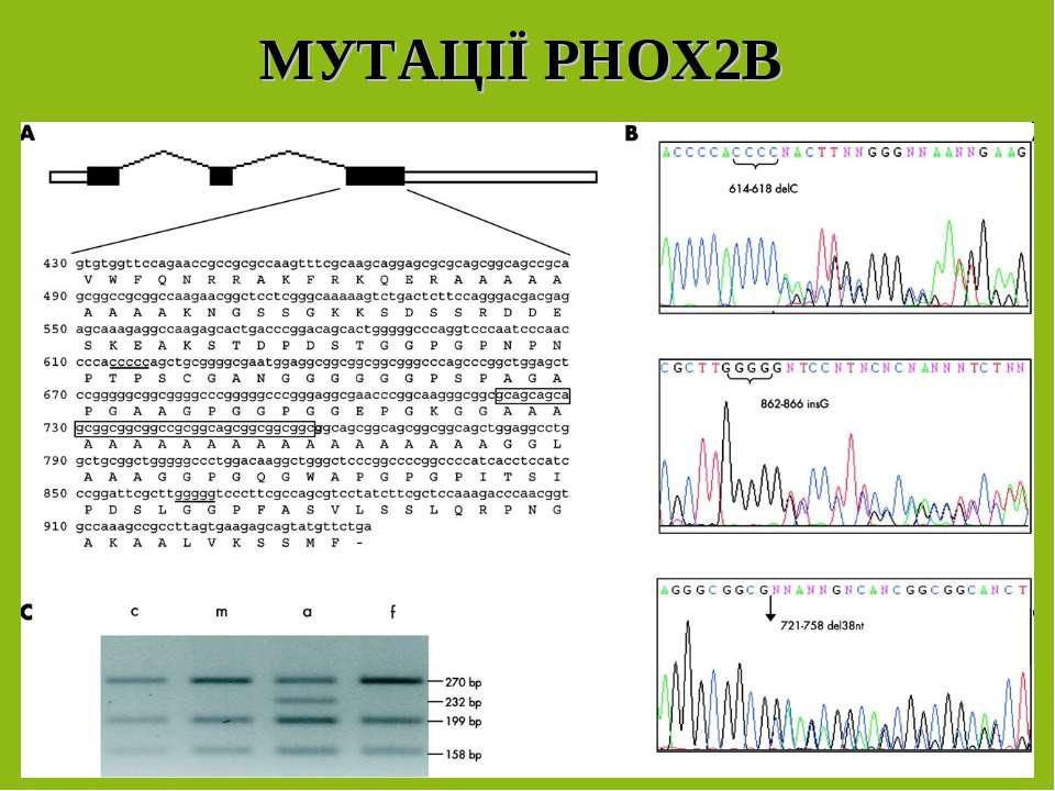 МУТАЦІЇ PHOX2B