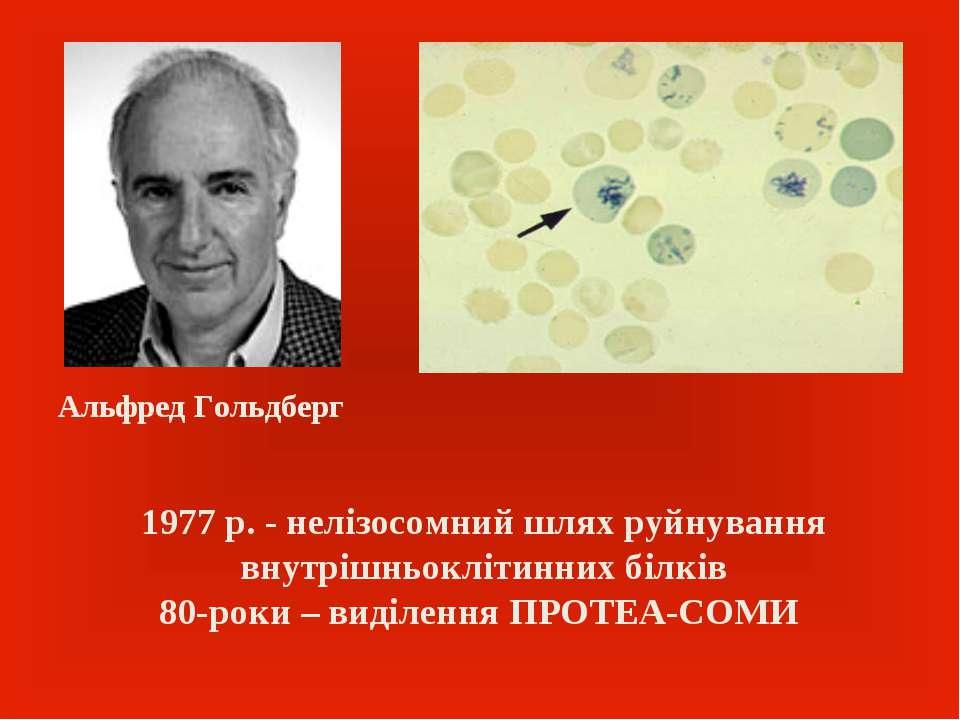 1977 р. - нелізосомний шлях руйнування внутрішньоклітинних білків 80-роки – в...