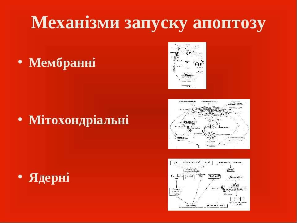 Механізми запуску апоптозу Мембранні Мітохондріальні Ядерні