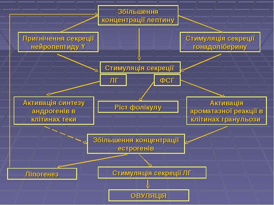 Збільшення концентрації лептину Пригнічення секреції нейропептиду Y Стимуляці...