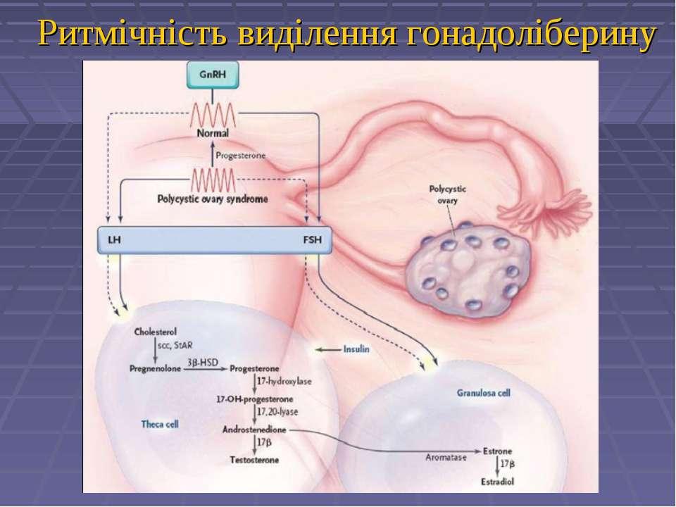 Ритмічність виділення гонадоліберину