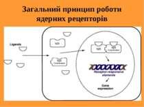 Загальний принцип роботи ядерних рецепторів