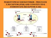 РЕЦЕПТОРИ КСЕНОБІОТИКІВ - PREGNANE X RECEPTOR (PXR) AND CONSTITUTIVE ANDROSTA...