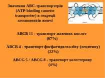 Значення АВС-транспортерів (ATP-binding cassette transporter) в секреції комп...