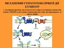 МЕХАНІЗМИ ГЕПАТОТОКСИЧНОЇ ДІЇ ЕТАНОЛУ 1. Активація протеїну, що зв`язується і...