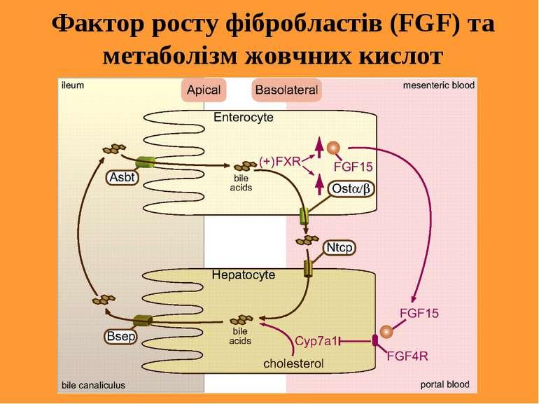 Фактор росту фібробластів (FGF) та метаболізм жовчних кислот