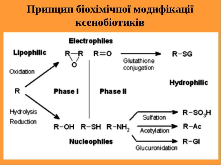 Принцип біохімічної модифікації ксенобіотиків