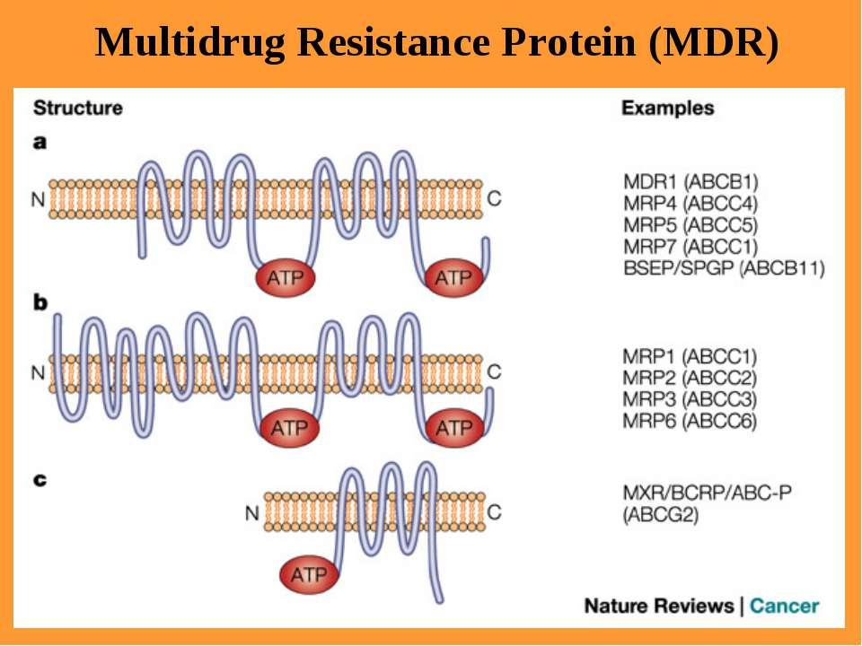 Multidrug Resistance Protein (MDR)