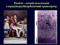 Pendrin – натрій-незалежний хлорид/йодид/бікарбонатний транспортер