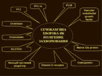 СЕЧОКАМ'ЯНА ХВОРОБА ЯК ПОЛІГЕННЕ ЗАХВОРЮВАННЯ Vascular endothelial growth fac...