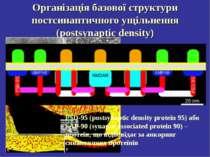 Організація базової структури постсинаптичного ущільнення (postsynaptic densi...