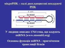 мікроРНК – малі двохланцюгові некодуючі РНК Основна функція miRNA - пригнічен...