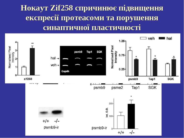Нокаут Zif258 спричинює підвищення експресії протеасоми та порушення синаптич...