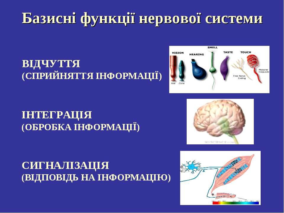 Базисні функції нервової системи ВІДЧУТТЯ (СПРИЙНЯТТЯ ІНФОРМАЦІЇ) ІНТЕГРАЦІЯ ...