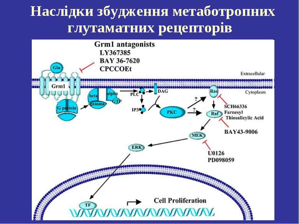 Наслідки збудження метаботропних глутаматних рецепторів