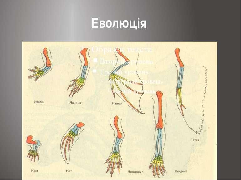 Еволюція
