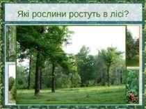 Які рослини ростуть в лісі?