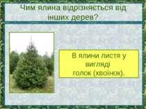 Чим ялина відрізняється від інших дерев? В ялини листя у вигляді голок (хвоїн...