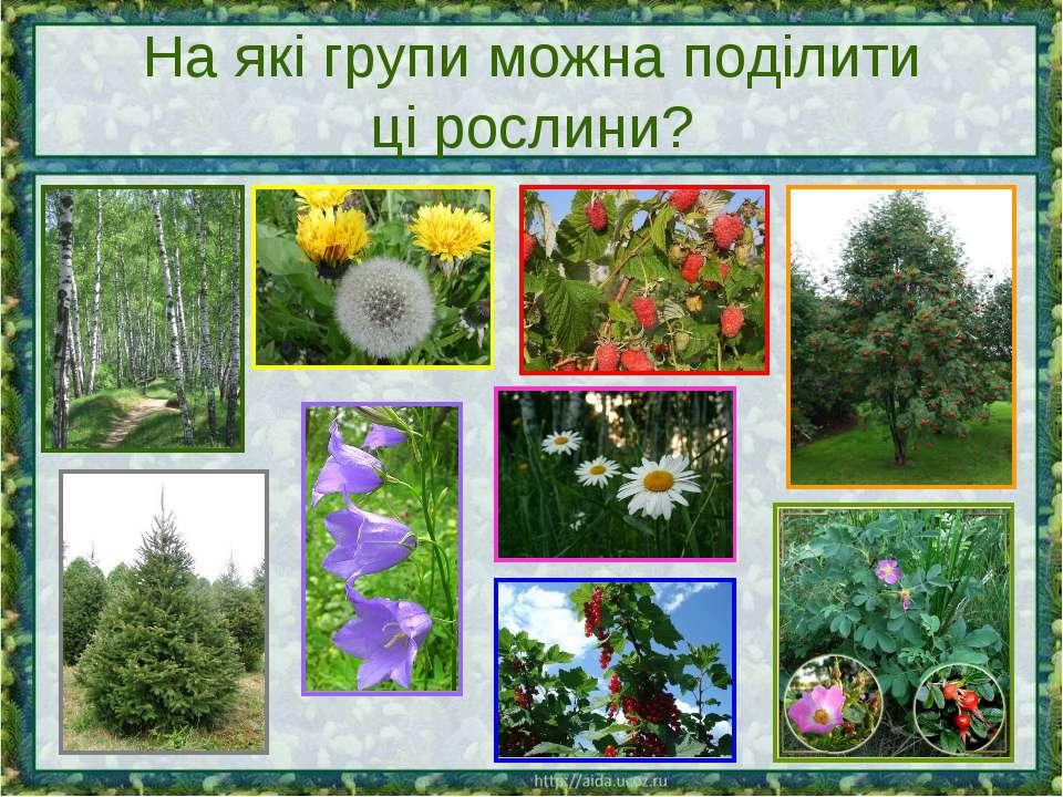 На які групи можна поділити ці рослини?