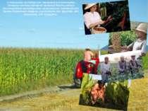 У сільському господарстві переважає рослинництво. Основну частину товарної пр...