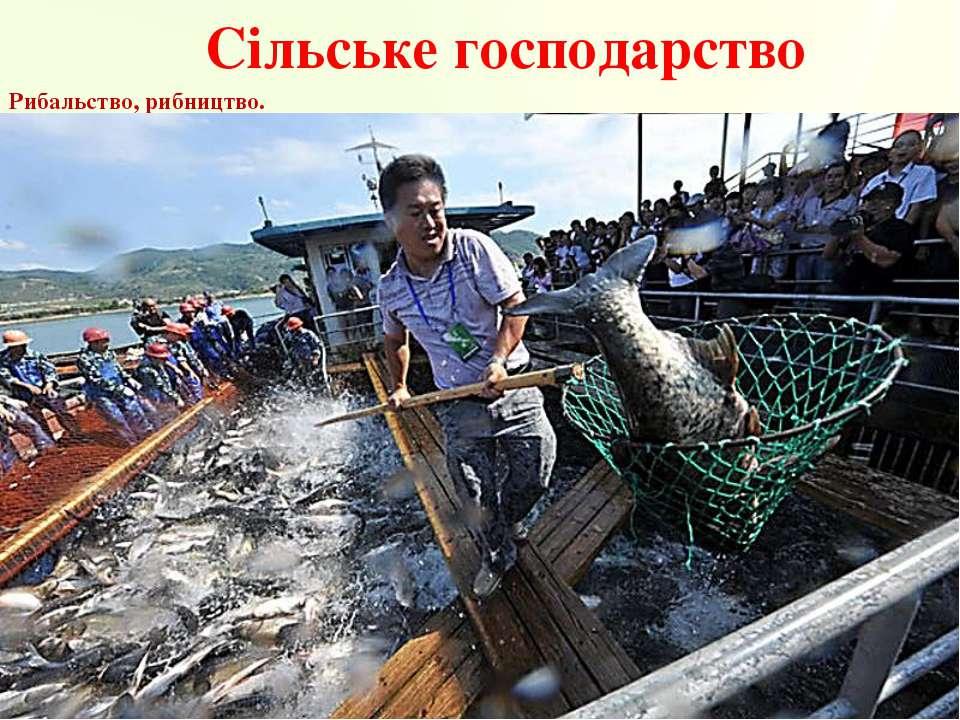 Сільське господарство Рибальство, рибництво.