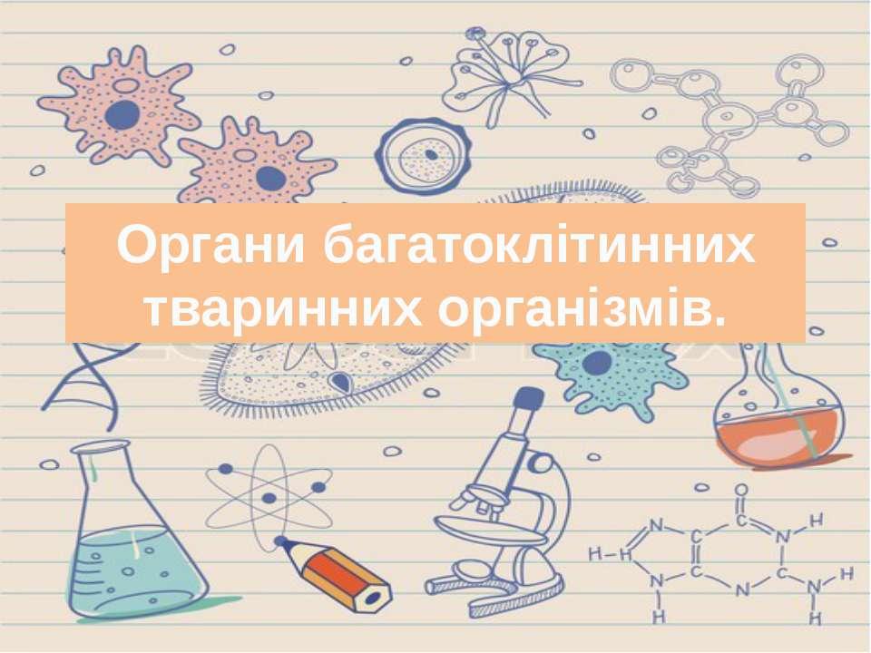 Органи багатоклітинних тваринних організмів.