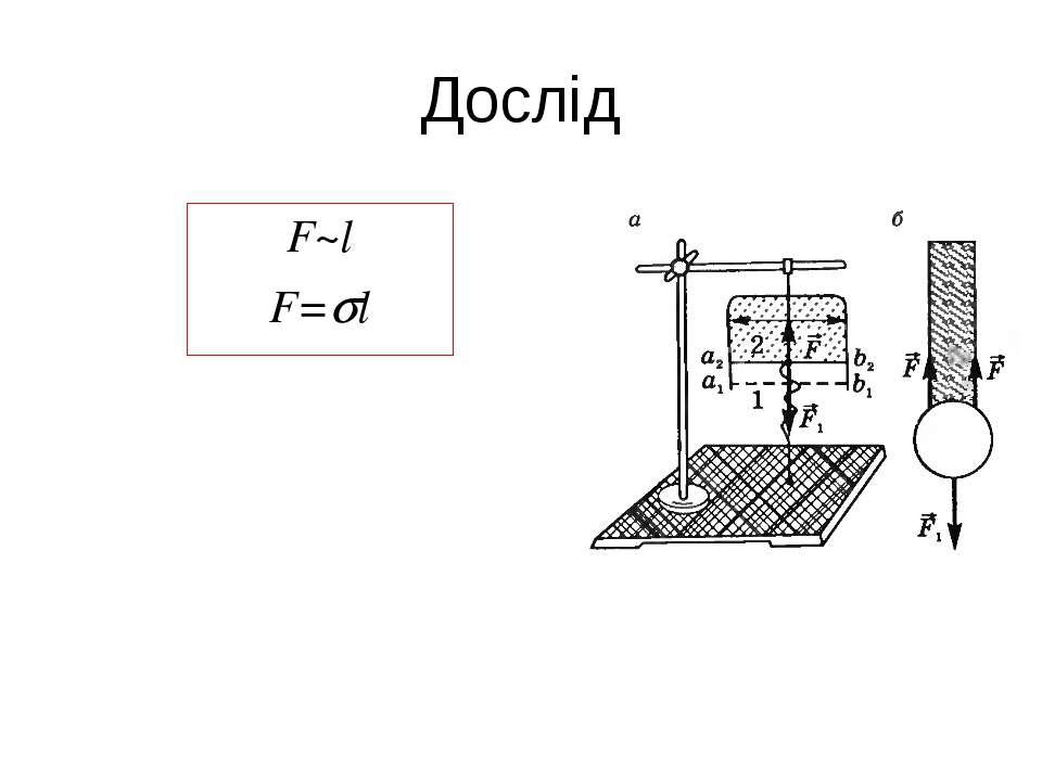 Дослід F~l F= l