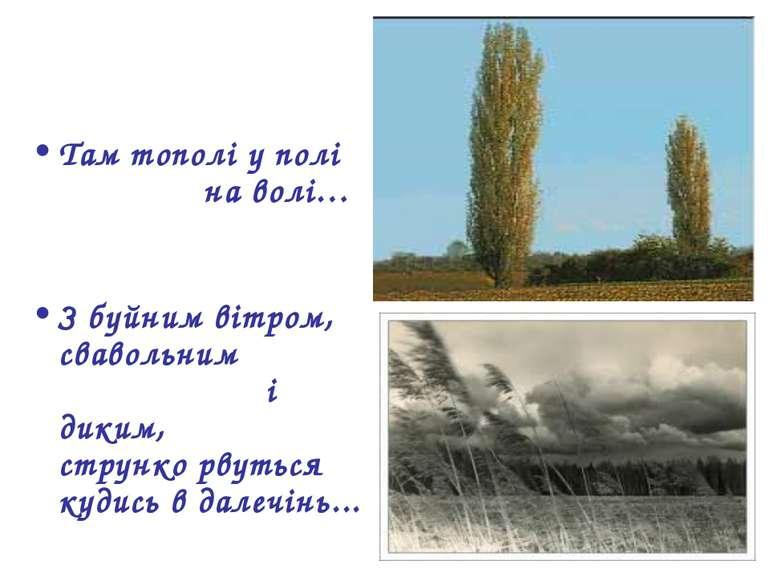 Там тополі у полі на волі… З буйним вітром, свавольним і диким, струнко рвуть...